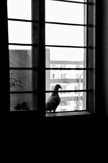 Close-up of bird perching on window