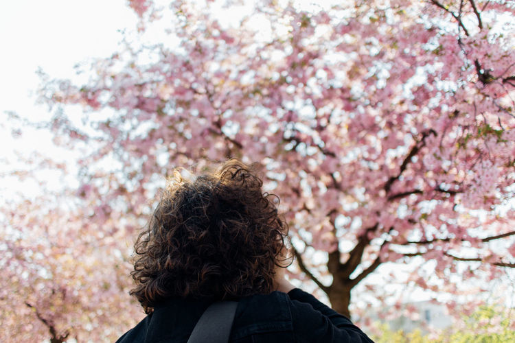 Rear view of man with pink cherry blossoms in spring
