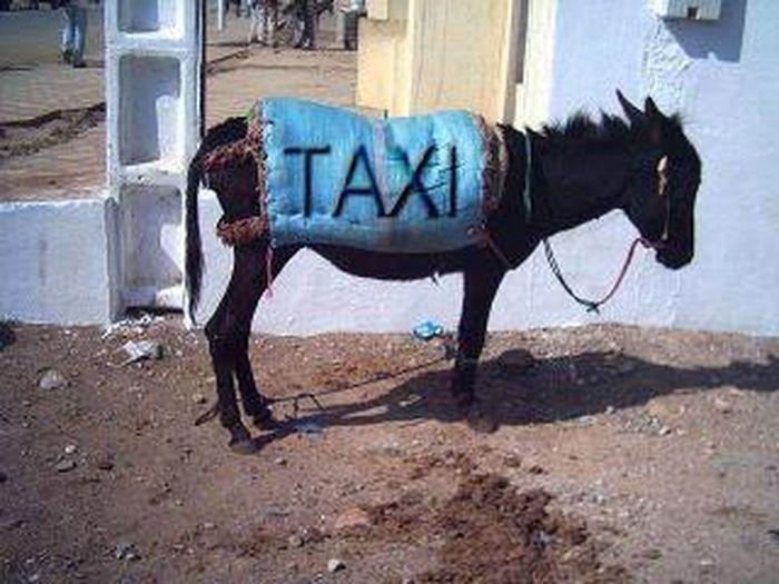 taxii Morocco Marocain United States Taxi