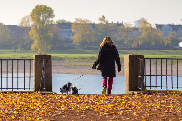 Rear view of woman with dogs standing in front of river