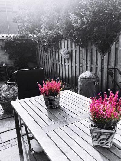 IPhoneography Garden Flower Flowering Plant Plant Nature Freshness Fragility Vulnerability  No People Seat Table Potted Plant Vase Arrangement Flower Pot