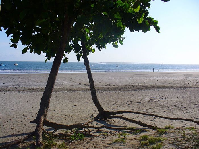 Helping Each Other Surviving Trees On Beach Somebody To Lean On Leaning Tree Roots  Soul Mates Growing Together