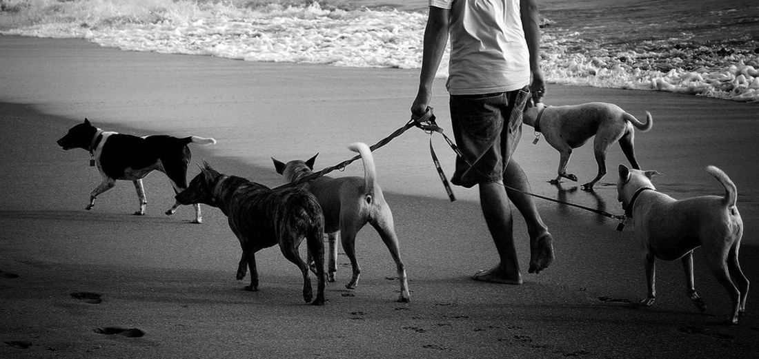 Man With Dogs On Beach