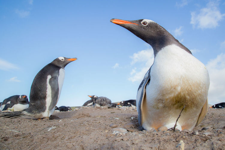 Close-up of penguin at beach against sky