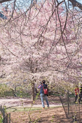 Real People Tree Lifestyles One Person Plant Day Full Length Nature Leisure Activity Growth Men Women Flower Park Beauty In Nature Standing Springtime Branch Flowering Plant Outdoors