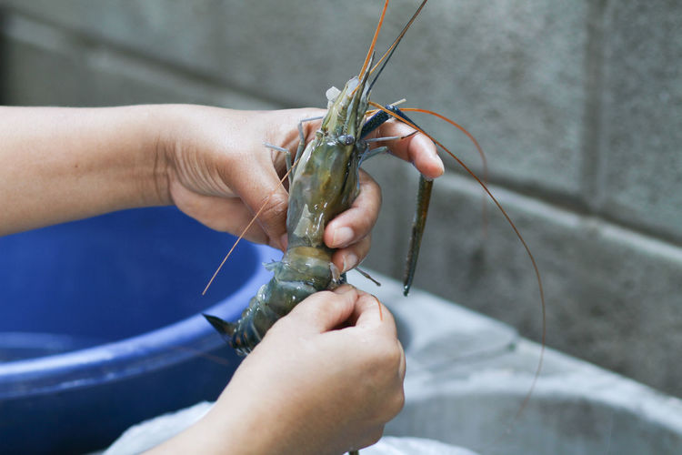 Cropped hands of chef cleaning raw seafood