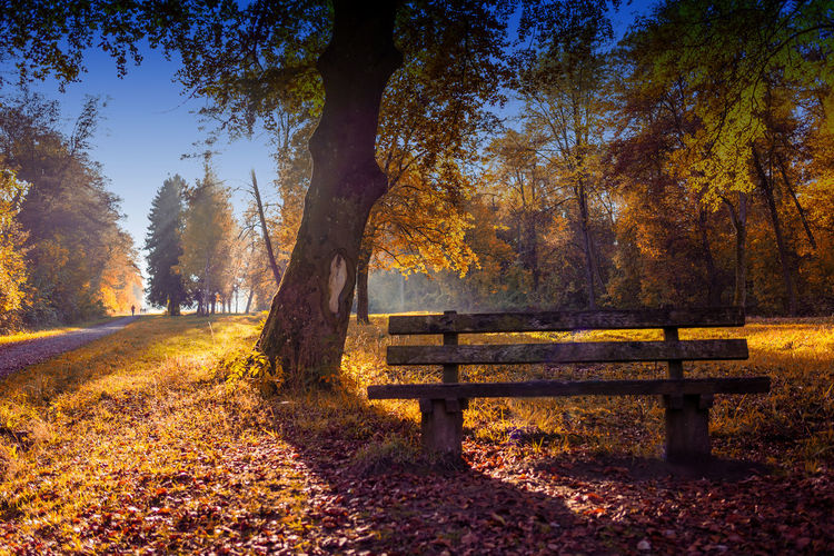 Autumn Beauty In Nature Bench Leaf Nature No People Outdoors Park - Man Made Space Park Bench Shadow Tranquility Tree