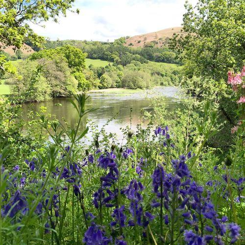 Bluebells River