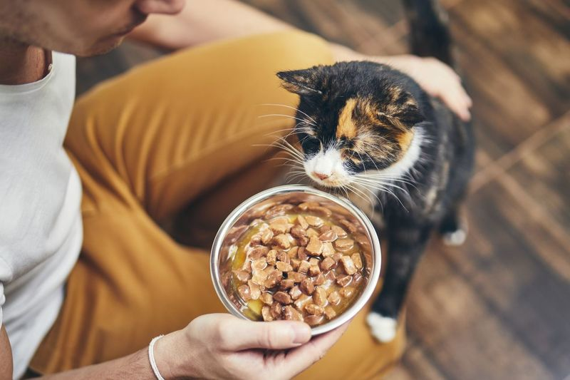Domestic life with pet. Man holding bowl with feeding for his hungry cat. Men Home Kitchen Cat Domestic Life Pets Domestic Animals One Animal One Person Real People Domestic Cat Hand Feline Lifestyles Pet Owner Care Bonding Embracing Feeding  Food Hungry Eating Tasty Bowl Touching