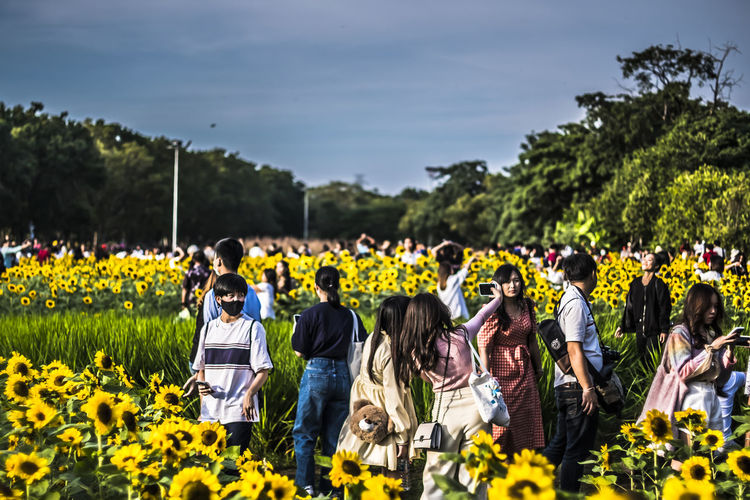 Group of people on sunflower field