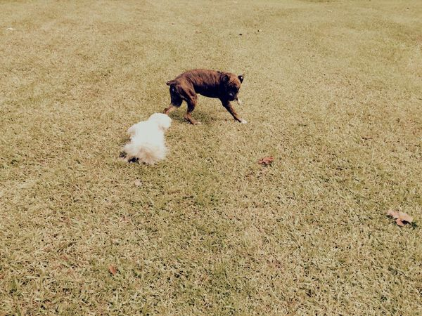 Hello Sunshine Holidays ☀ Friends Isis😍 Myprincess🐶🐶 Ilovemydog