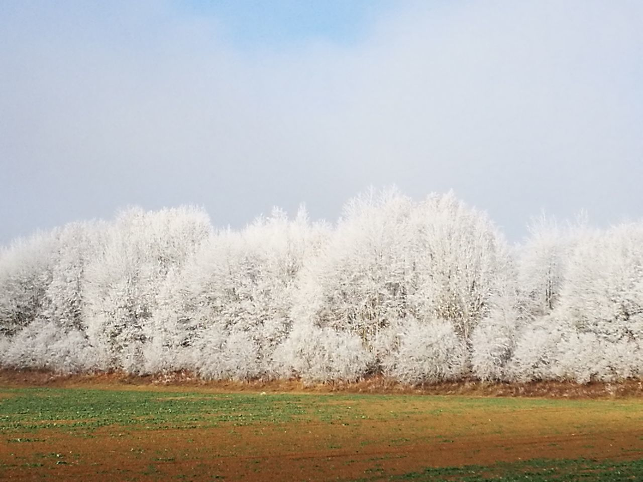 nature, beauty in nature, no people, day, outdoors, grass, field, scenics, tranquility, landscape, growth, clear sky, tree, cold temperature, sky