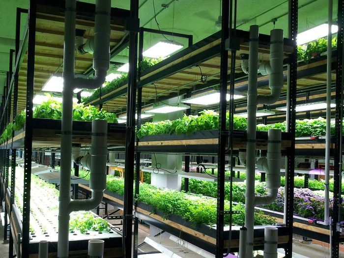 Hydroponic Hydroponics Hydroponic Vegetables Hydroponicsystem Aquaponics Aquaponic Agriculture Alternative Agriculture