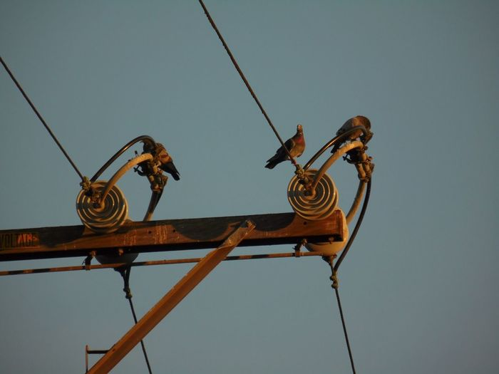 /: I See Faces The Purist (no Edit, No Filter) Lookingup Birds On A Wire