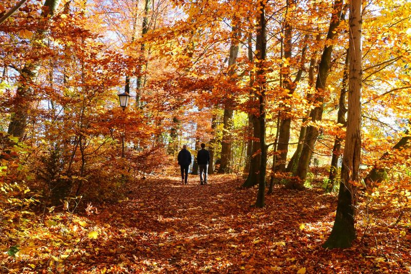 People walking on street amidst trees during autumn