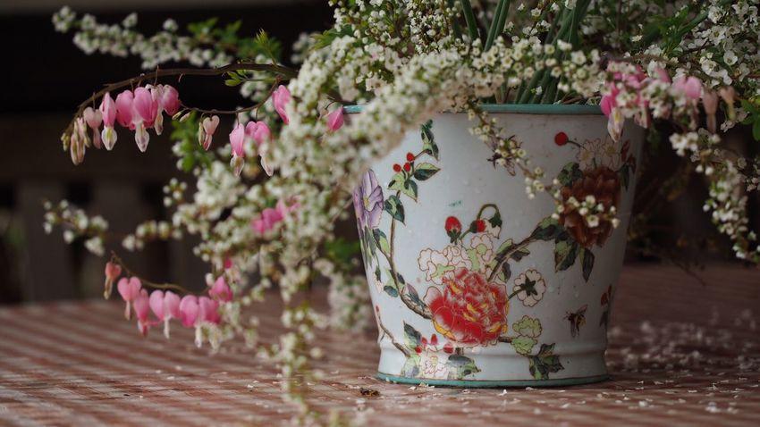 Beautiful Nature Flower Photography Flowerlovers EyeEm Nature Lover EyeEm Best Shots Spring Pink White Flower Light And Shadow Check