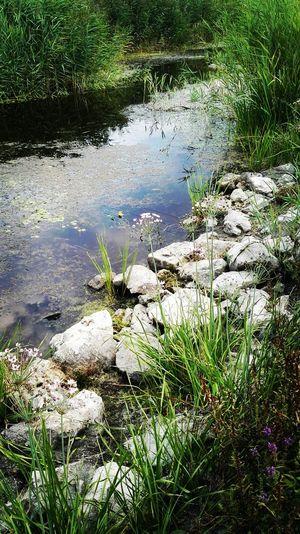 Rocks Water Ditch