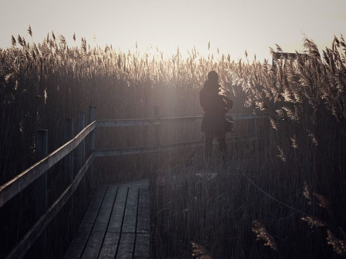 Amongst the reeds Plant Sky Nature Tree Growth Railing No People Day Sunlight Outdoors Land Tranquility Beauty In Nature Footpath Tranquil Scene Silhouette