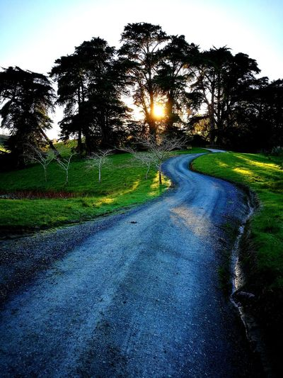 Tree Nature The Way Forward Outdoors Beauty In Nature Road To The Sun Morning Light Sunny Outside Photography Thats Nature No People Plants Enjoy The Moment Love Life