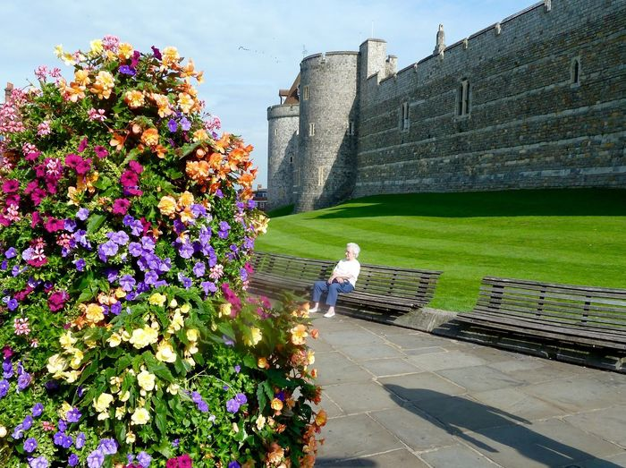 Windsor, uk Royal Wedding Royalty Windsor Castle Flower Day Outdoors Architecture Built Structure Growth Steps And Staircases Nature Sunlight Real People One Person Women Building Exterior Beauty In Nature Plant Fragility Sky People