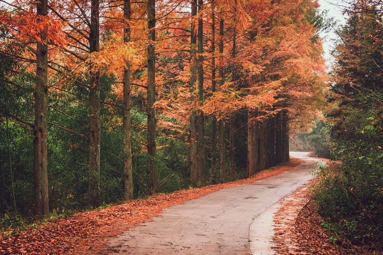 Autumn road in rainy days Tree Plant Autumn Direction Forest Road Change Tranquility Nature Diminishing Perspective Treelined Fall