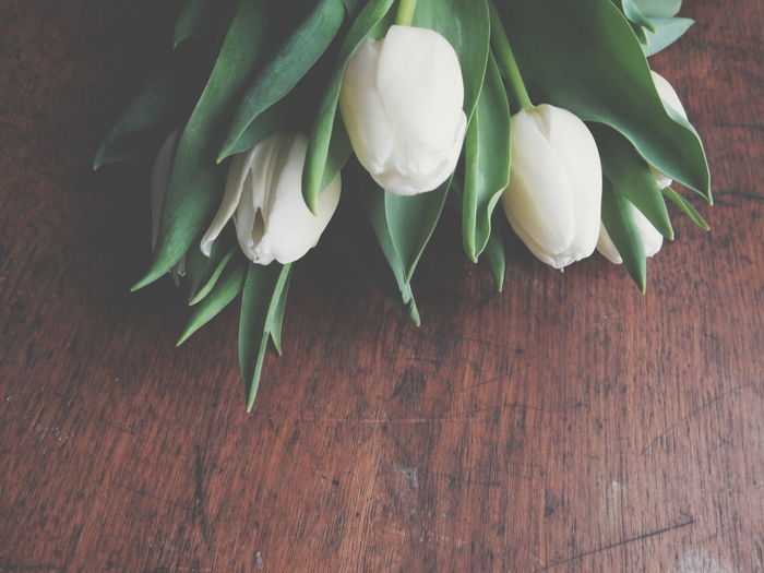 White tulips on rustic old wooden table Botany Close-up Detail Flower Flower Head Fragility Freshness Growing Growth Macro Nature Petal Single Flower Softness Stem White White Color Spring Flowers Tulips Tulip Spring Beauty In Nature New Life Blooming White Flowers