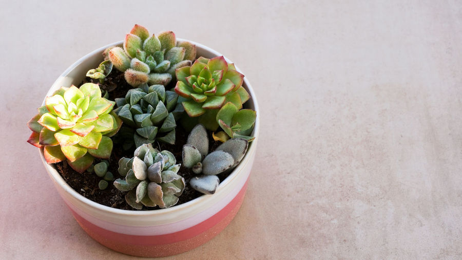 High angle view of potted plants in bowl