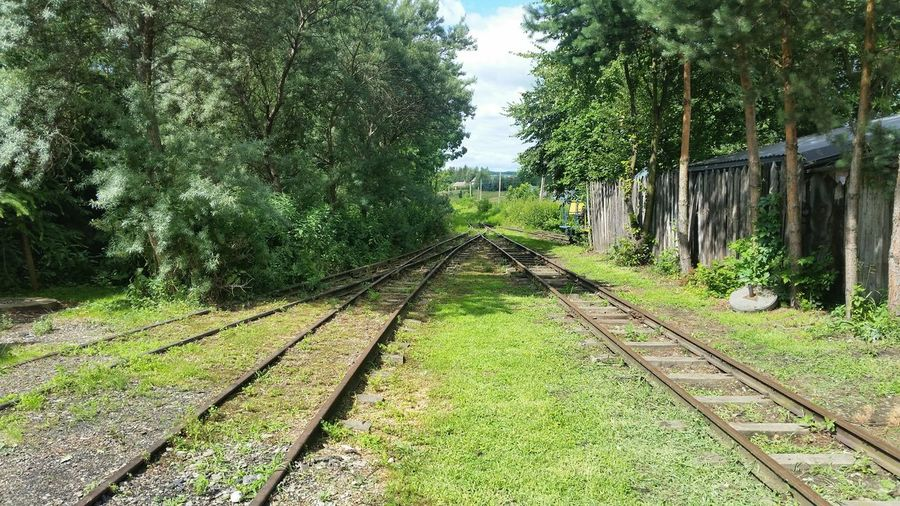 Tree The Way Forward Green Color Growth Day Railroad Track No People Outdoors Nature Grass Beauty In Nature Sky