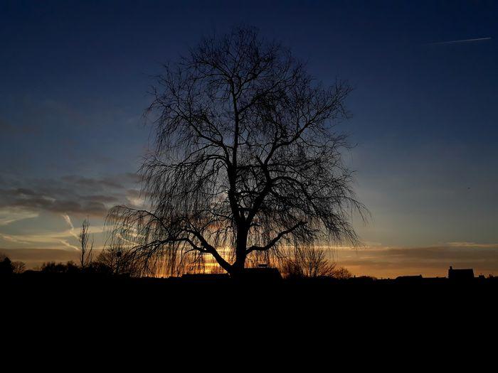 Sunrise Dark Light Good Morning Airplane Tree Sky Beauty In Nature Day