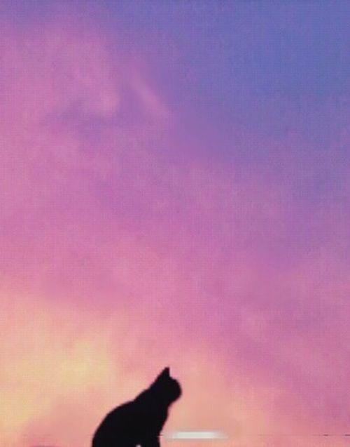 Cutepets Luces Y Sombras Cat♡ Lucas antes de irse.