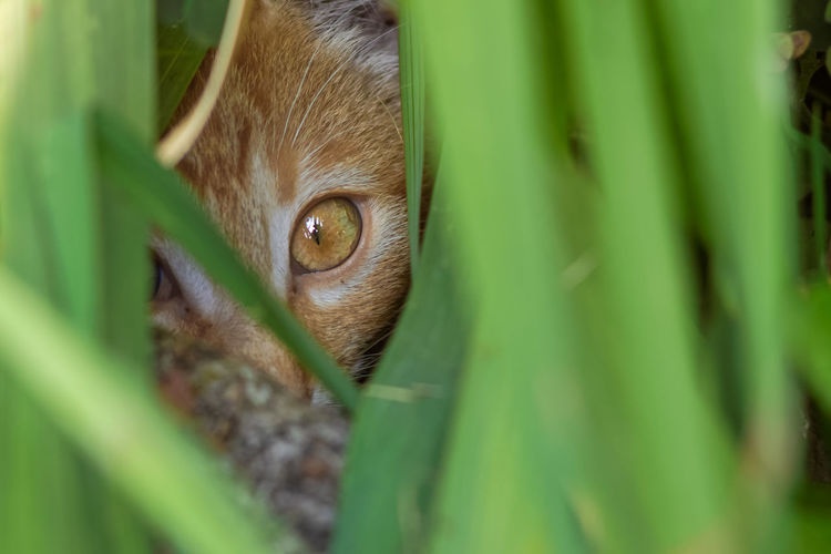 Portrait of cat hiding in grass