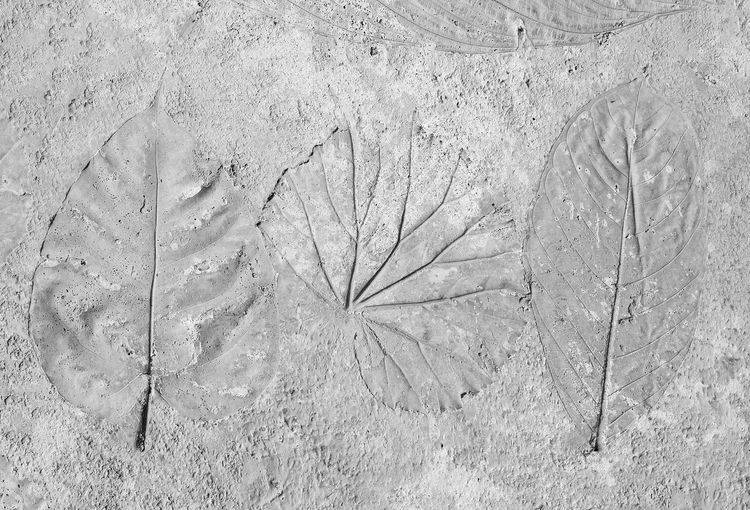 High angle view of frozen dry leaves on field