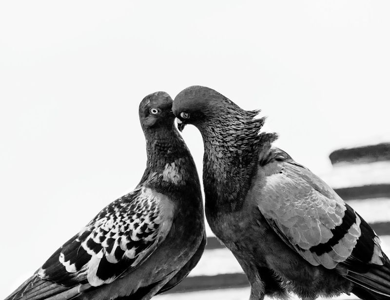 Monochrome Photography Bird Close-up Parrot Lover
