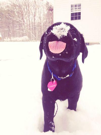 Sweet Dog Love It