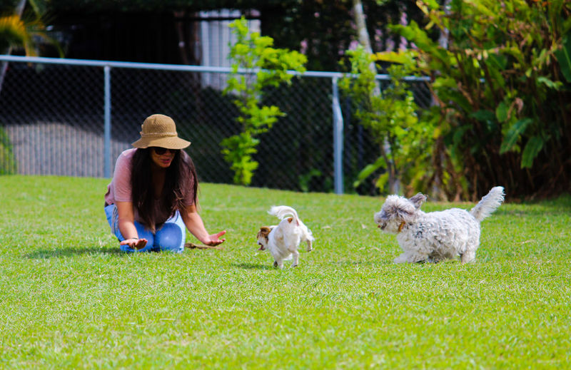 lolita, chu y popeye Costa Rica Heredia, Costa Rica Barva Friendship Pets Women Dog Full Length Rural Scene Tree Smiling Retriever Hat Puppy Lap Dog