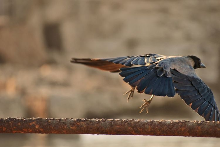 Close-up of bird flying over railing