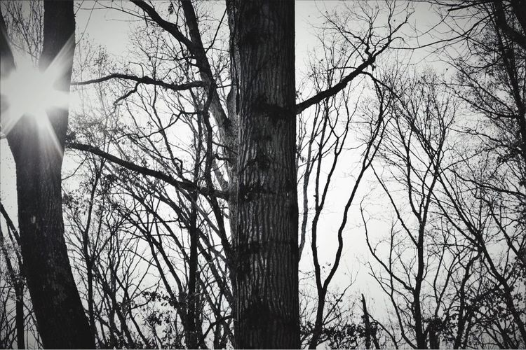 Sunlight in winter Blackandwhite Photography Sunlight Winter Tree Bare Tree Nature Branch Tranquility Outdoors Beauty In Nature Sky