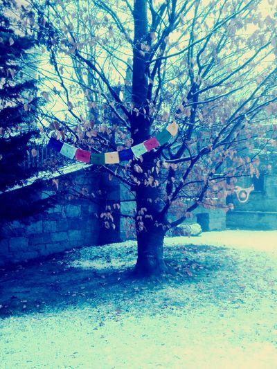 It's Cold Outside Winter Valtellina Albosaggia Nature