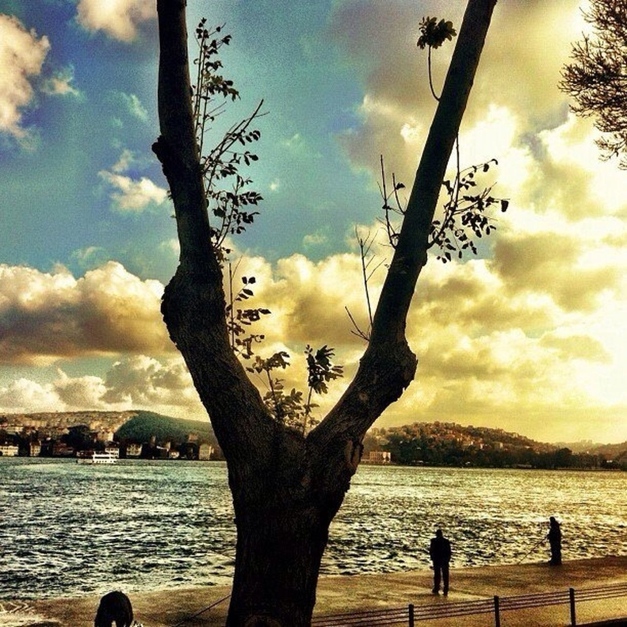 tree, sky, cloud - sky, water, tree trunk, nature, sea, outdoors, beauty in nature, scenics, tranquility, day, branch, no people