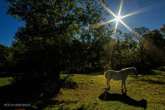 Horse sunbathing in Söderåsen. Sunbeam Sunlight One Animal Sun Animal Themes Tree Domestic Animals Lens Flare Shadow Sunny Dog Mammal Full Length Pets Growth Day Blue Green Color Tranquil Scene Tranquility Horse Nature Tree Outdoors