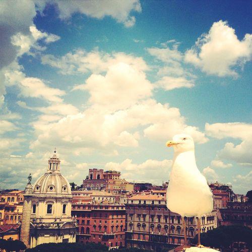 The Street Photographer - 2014 EyeEm Awards Rome Italy,