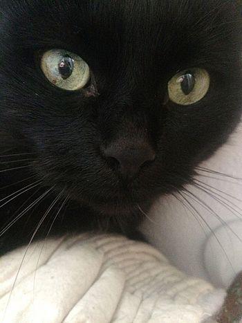 Cat Black Mine Love Her My Little Sister  🐱🐱🐱