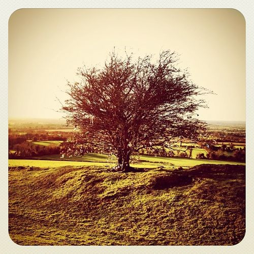 Just another #tree ? #ireland #hill_of_tara #beautiful_ireland #jj_forum #jj #earlybirdlove #alanisko_trees Tree Ireland Jj  Earlybirdlove Jj_forum Hill_of_tara Beautiful_ireland Alanisko_trees
