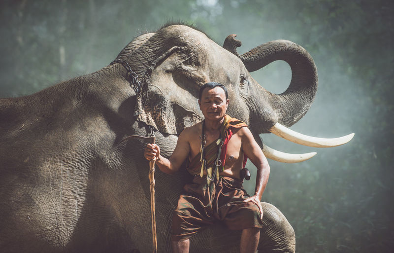 Man standing with elephant in forest