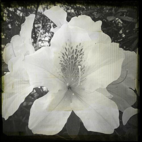 hurt so bad… Flowers I Feel Down... HongKong Snapshot