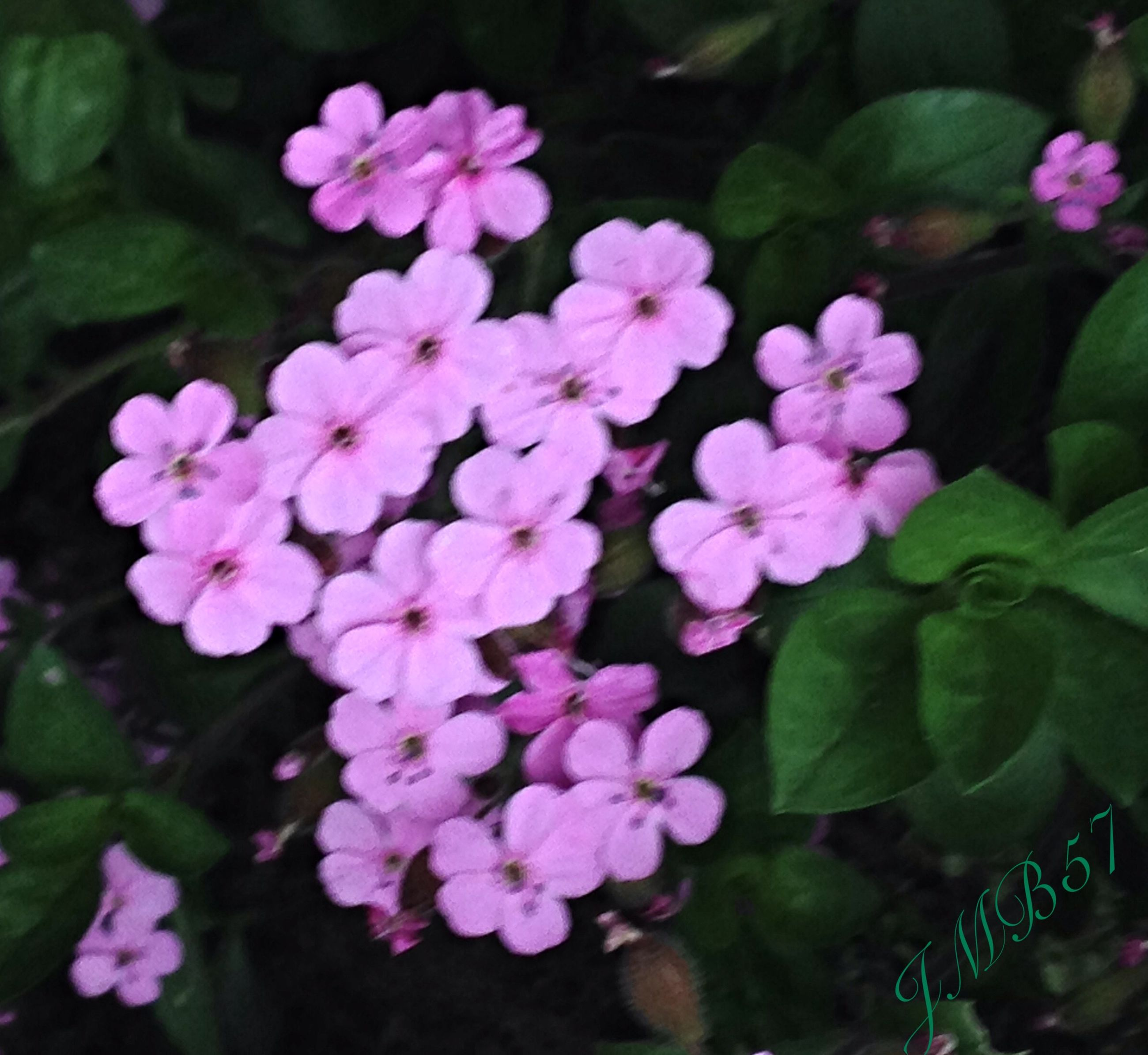 flower, freshness, petal, growth, fragility, beauty in nature, pink color, leaf, plant, flower head, nature, blooming, close-up, focus on foreground, in bloom, high angle view, purple, park - man made space, outdoors, day