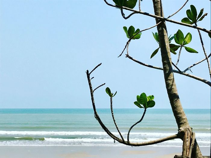 Weekend well spent Thailand Sea Nature Beauty In Nature Day Outdoors No People Beach Water Tree Sky Scenics Clear Sky Close-up Growth Branch Horizon Over Water