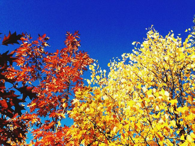 Autumn Colors Autumn Autumn Leaves IPhoneography Mobilephotography Tree And Sky Eye4photography
