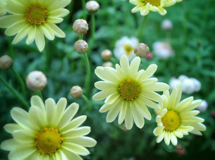 Flower Nature Flowerporn Flowers,Plants & Garden Nature_collection Flower Collection EyeEm Nature Lover 自然 花と庭 Flowers In My Garden