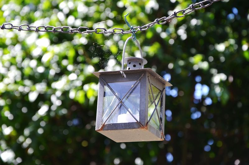 Low Angle View Of Lantern Hanging Against Tree